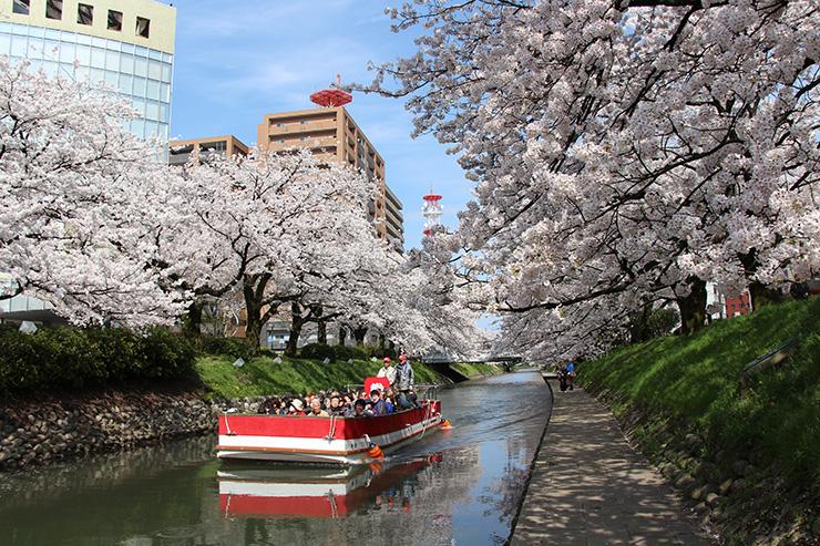 松川遊覧船 桜