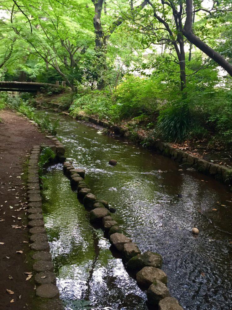 武蔵大学のキャンパス内を流れる濯川