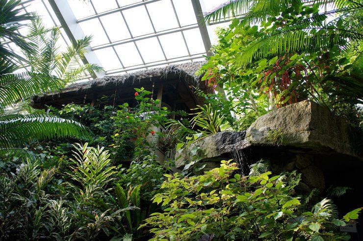 熱帯環境植物館 館内