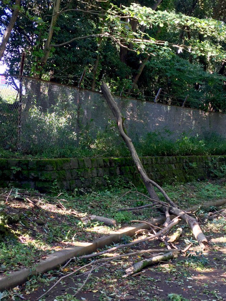 光が丘公園 折れた木