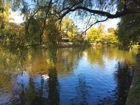 石神井公園-池の水面