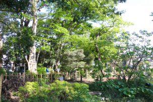 中里の森3